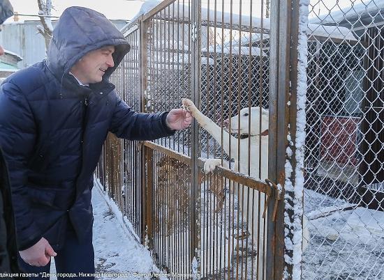 1-ый современный приют для собак икошек открылся вНижнем Новгороде