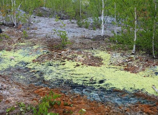 Напост министра экологии Нижегородской области претендуют 38 человек— Никитин