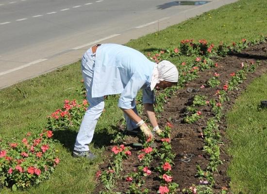 85 млн руб. на облагораживание цветников истратят вНижнем Новгороде