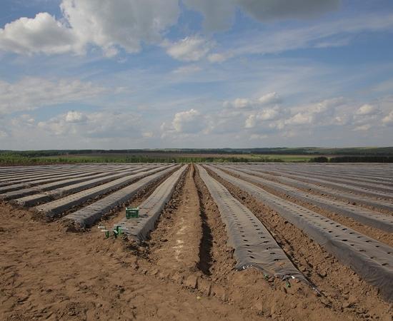 Производство ягод впромышленном масштабе открылось вНижегородской области