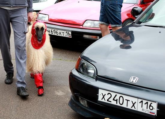Фестиваль элегантных авто клуба Wrongcars откроется 17июня настадионе «Водник»